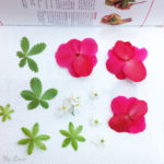 placing summer flowers on a paper towel and press them between book pages
