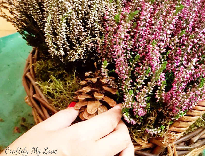 decorating a heather basket with a pine cone. Perfect transition from fall to winter.