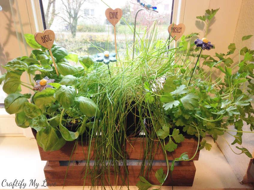 windows indoor herb garden with handmade plant or herb markers