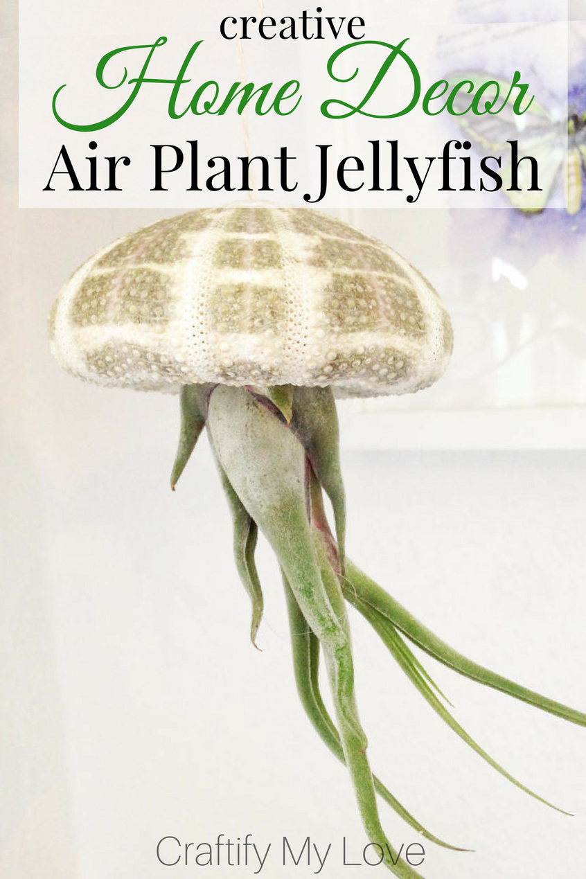 Will you look at this Jellyfish? If that is not Creative Home Decor, then I don't know what, lol!!! It's made from a sea urchin scelleton and air plants. If you are into nautical decorations click through and learn how to DIY this without hurting the plant! #craftifymylove #creativedecor #airplantdecor #howtotakecareofairplants #DIYjellyfish