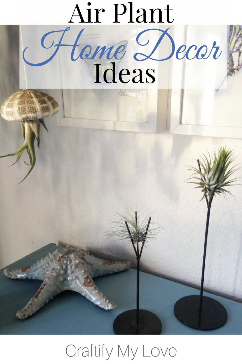 how to decorate your home with living art: Click for Air Plant home decor ideas. #craftifymylove #coastaldecor #industrial #homedecoronabudget #airplants #beachydecor