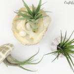 air plant display ideas with sea shells. living home decor